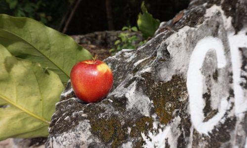 cenote-nicte-ha1
