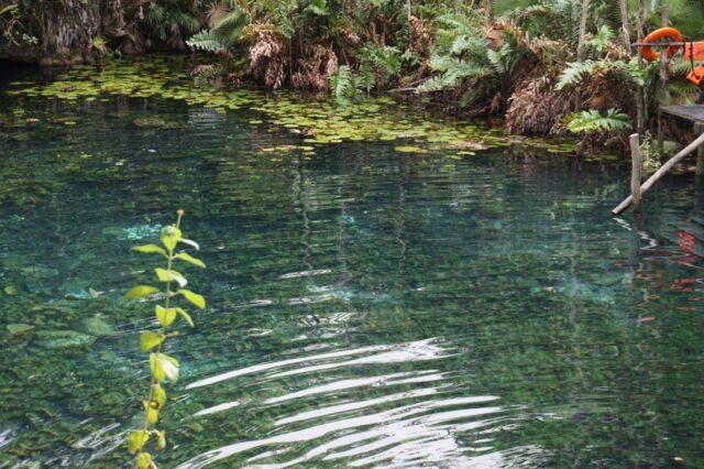 cenote-nicte-ha6