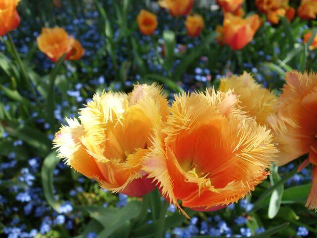 spring-butchart10
