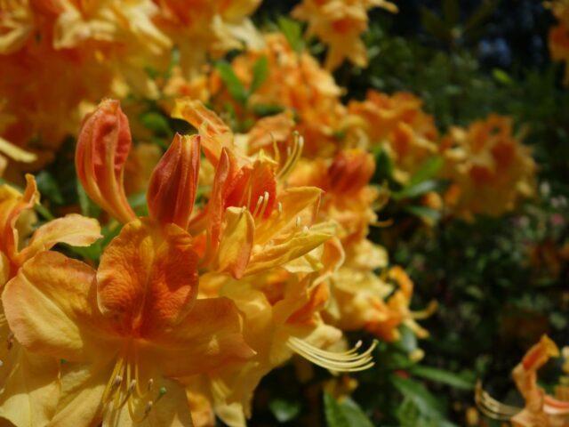 spring-butchart29