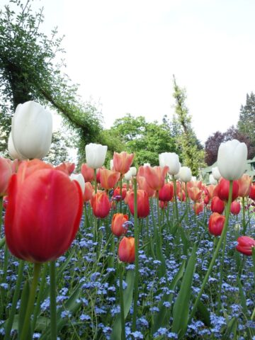 spring-butchart7