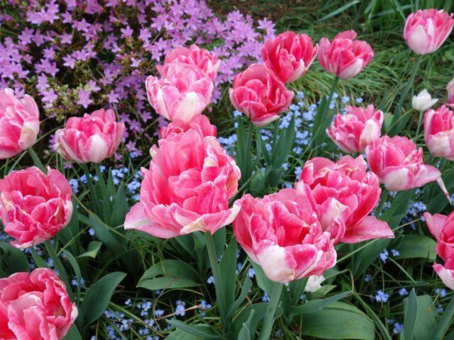 spring-butchart9